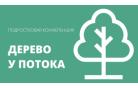 Дерево у потока. Подростковая конференция минской области. Дневник